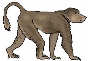 Affen Zum Ausdrucken Kostenlos