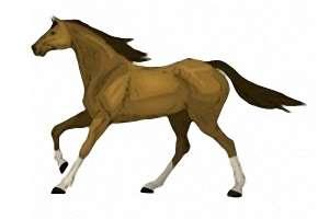 pferde spiele de kostenlos
