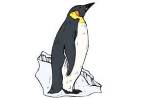 ausmalbilder pinguine ausdrucken