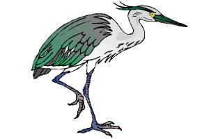 ausmalbilder vögel kostenlos