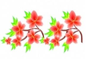 Blumen Bilder Ausdrucken Kostenlos