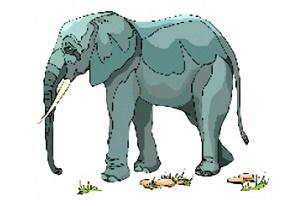 Malvorlagen elefanten 7