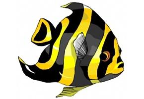bilder von fischen kostenlos