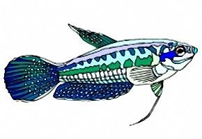 fische ausmalbilder