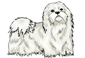 hunde spiele online kostenlos