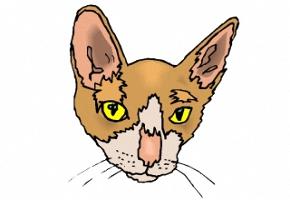 Malvorlagen Katzenkopf Kostenlos