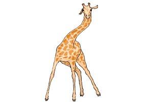 giraffen spiele kostenlos