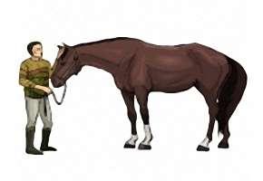 Pferde Ausmalbilder Gratis