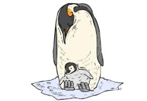 Pinguine Malvorlagen Kostenlos