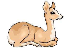 Tiere Zeichenvorlagen Kostenlos