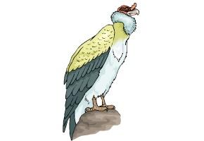 vögel zum ausdrucken kostenlos